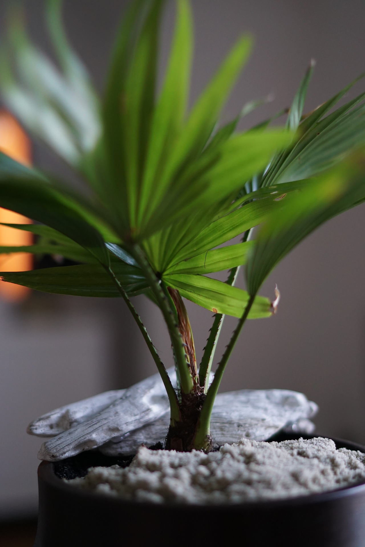 potted-plant-918779_1920